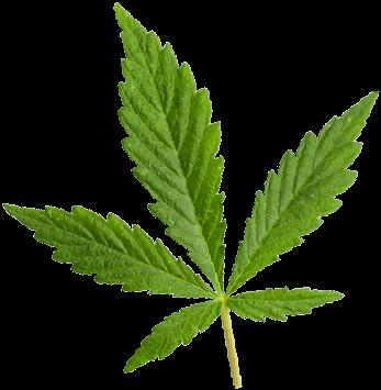 https://www.spogenetics.com/wp-content/uploads/2018/12/marijuana_leaf.png
